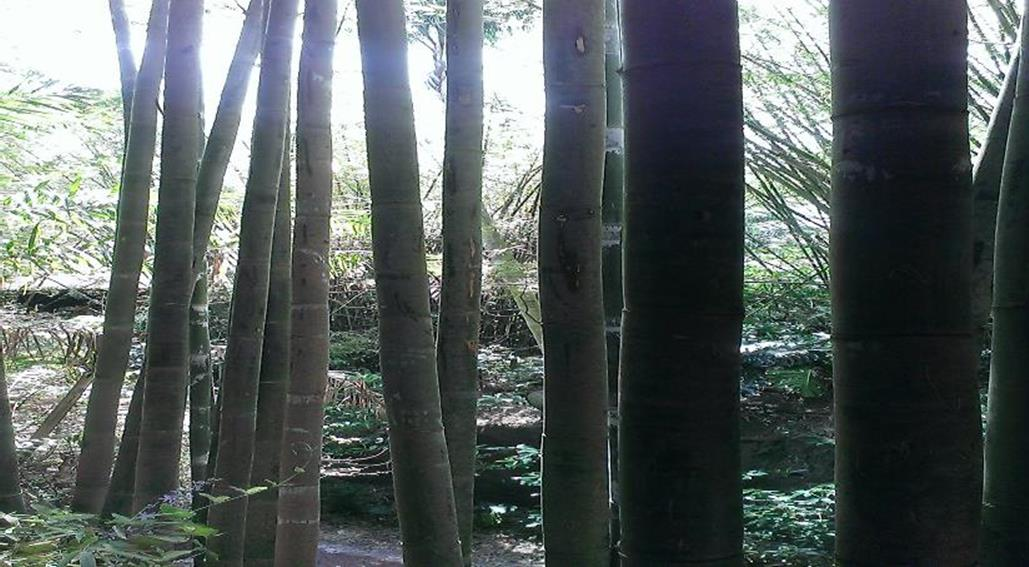 tropical bamboo